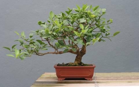 12-bonitas-formas-de-decorar-la-casa-con-plantas-de-interior-bonsai