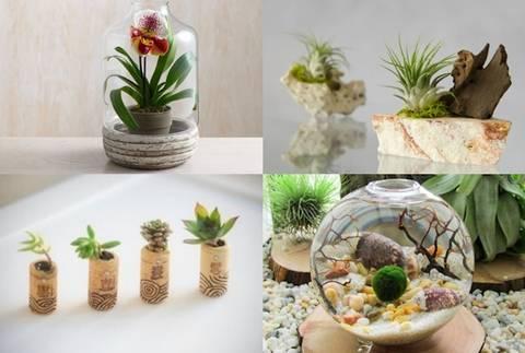 12-bonitas-formas-de-decorar-la-casa-con-plantas-de-interior