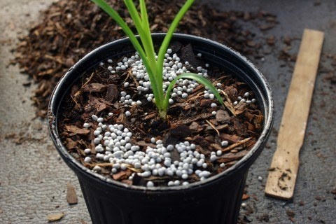 planta-transplantada