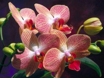 orquideas11.jpg