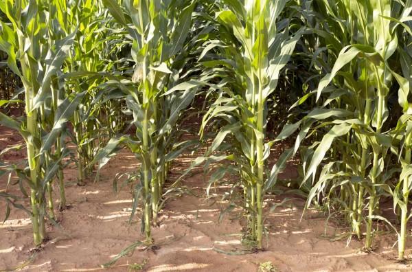 suelos-arcillosos-caracteristicas-y-cuidados-cultivo