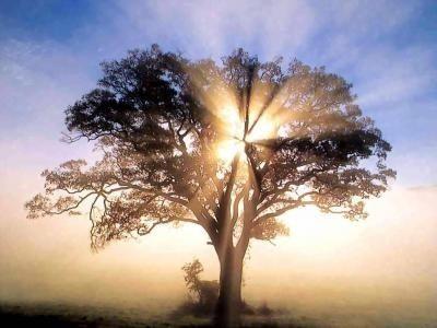 La función de los árboles