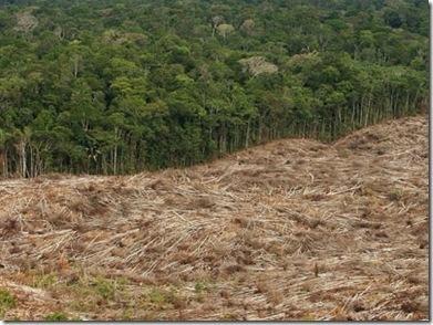 deforestacion40