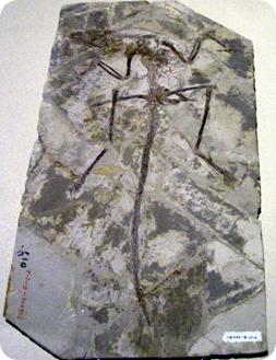 Microraptor, dinosaurio volador