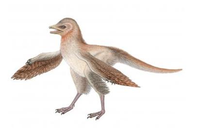 dinosaurio, Eosinopteryx
