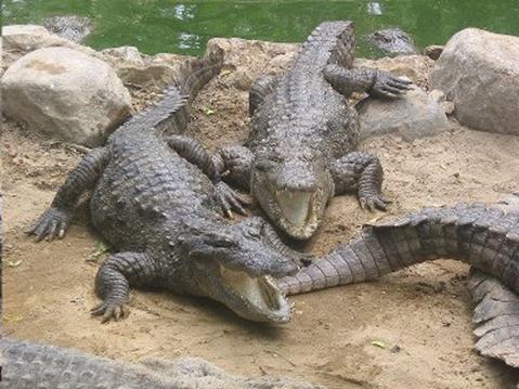 Los grandes depredadores