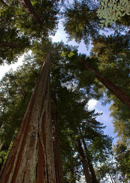 La importancia del árbol.3JPG