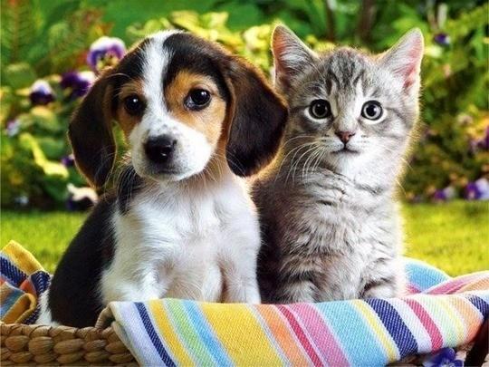 Cómo adoptar cachorros