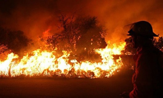 ¿Cómo actuar ante un incendio forestal?