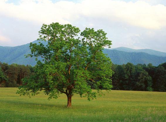 La importancia del árbol