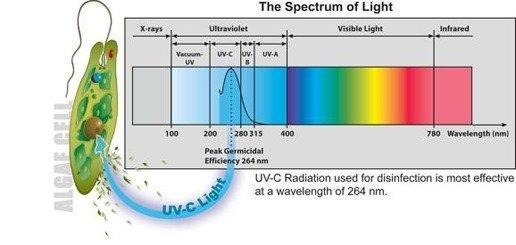 """""""UV-C"""" light"""