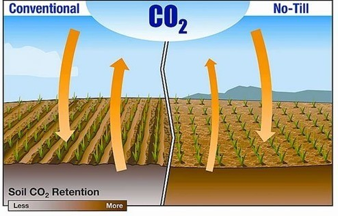 Agricultura-carbono