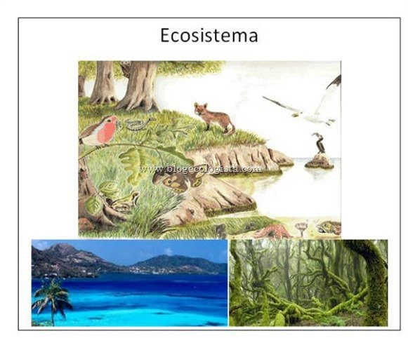 ¿Qué es un ecosistema?