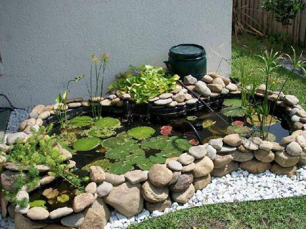 estanque plantas