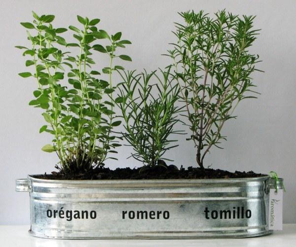 hierbas aromatica