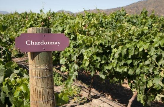 vino-chardonnay.jpg