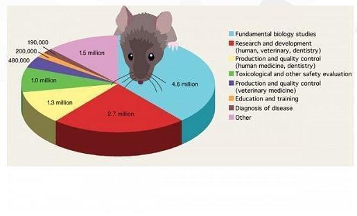 experimentacion-animales.jpg
