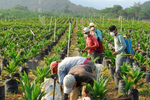Empresas unidas para lograr la sustentabilidad