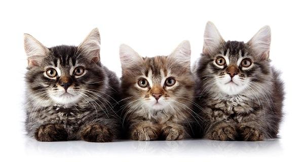 fotos gatos 11