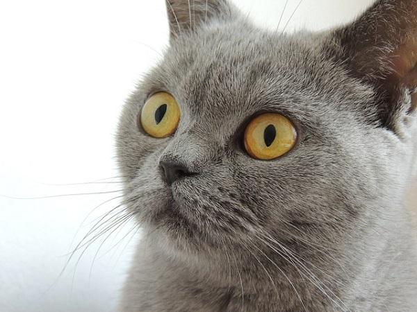 fotos gatos 13