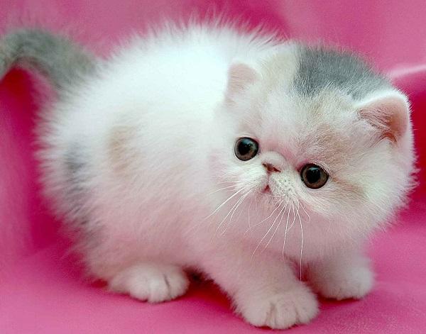 fotos gatos 14