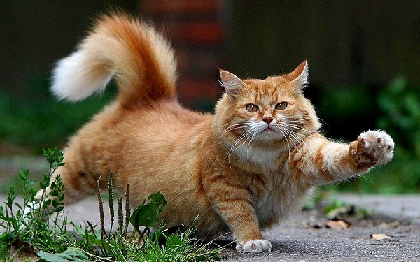 fotos gatos 16