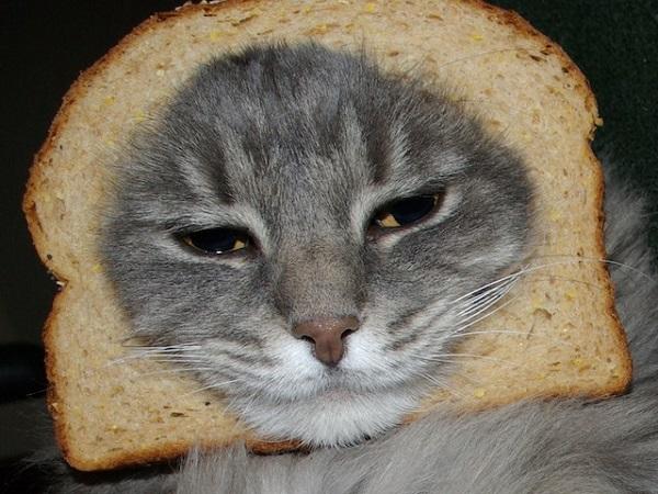 fotos gatos 17