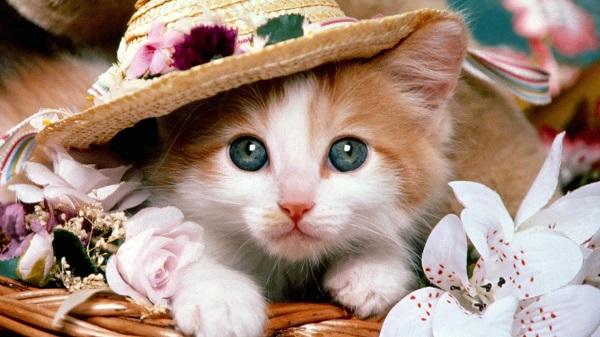 fotos gatos 20