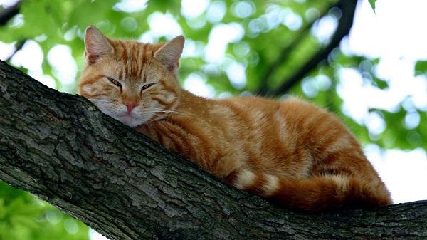 fotos gatos 22