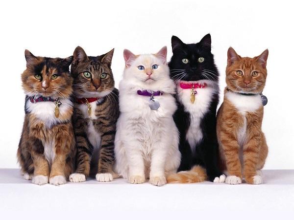 fotos gatos 24