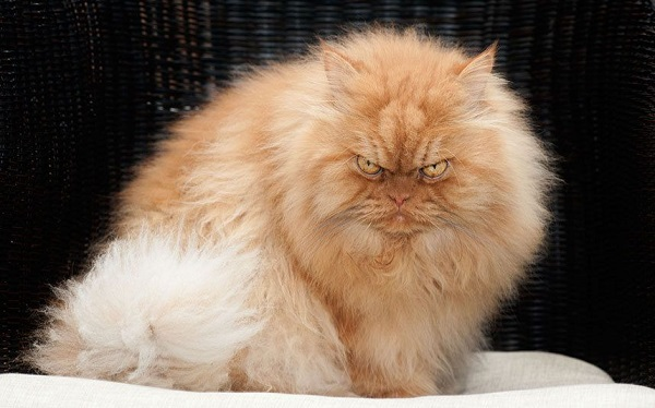 fotos gatos 25