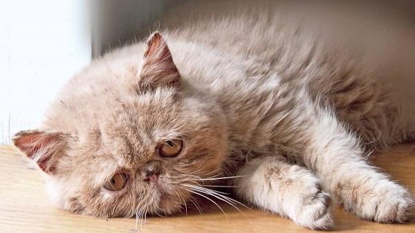 fotos gatos 27