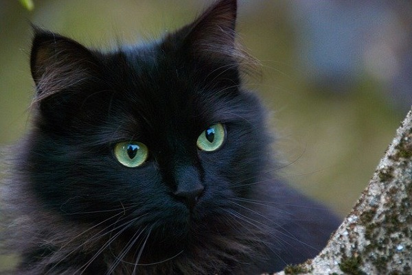 fotos gatos 28