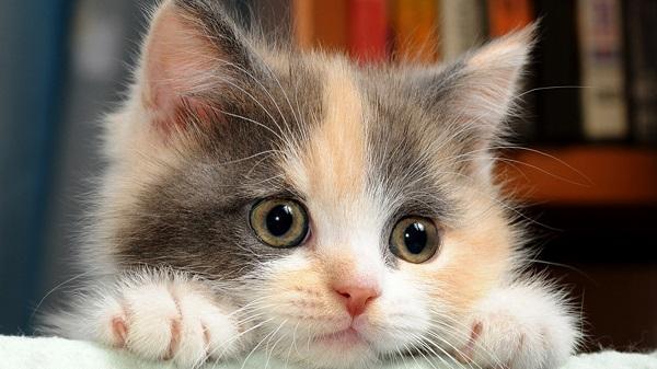 fotos gatos 4