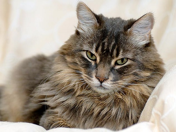 fotos gatos 5