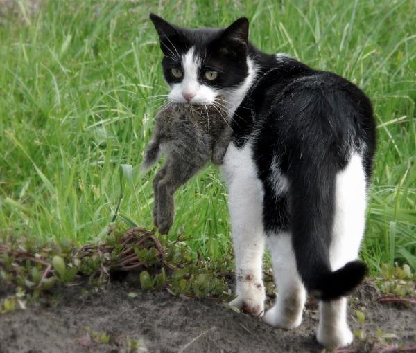 fotos gatos 6