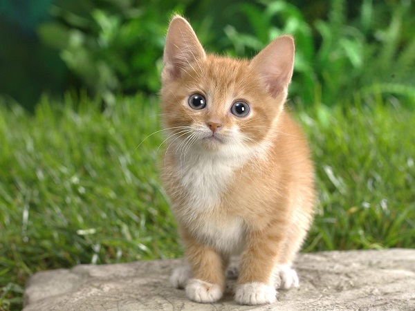 fotos gatos 9