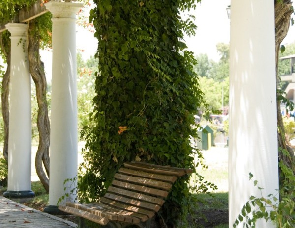 plantas-trepadoras-parque