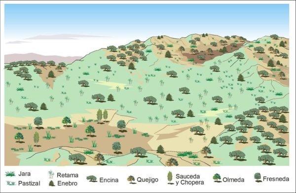 bosque-mediterraneo-fauna-mapa-biodiversidad