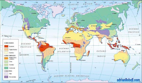 bosque-mediterraneo-fauna-mapa-clima-mediterraneo