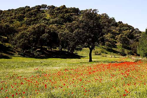 bosque-mediterraneo-flora-dehesaa