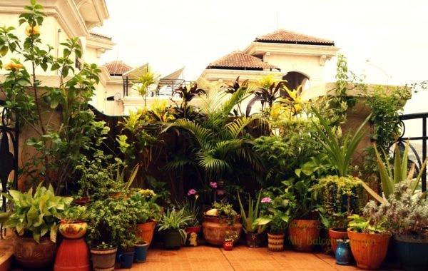 colores-terrazas-con-estilo-2016-plantas-verdes
