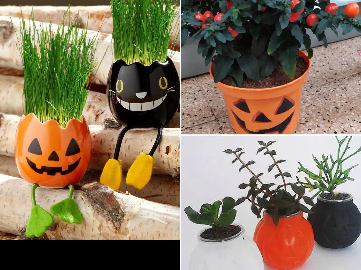 Decoración con plantas para Halloween