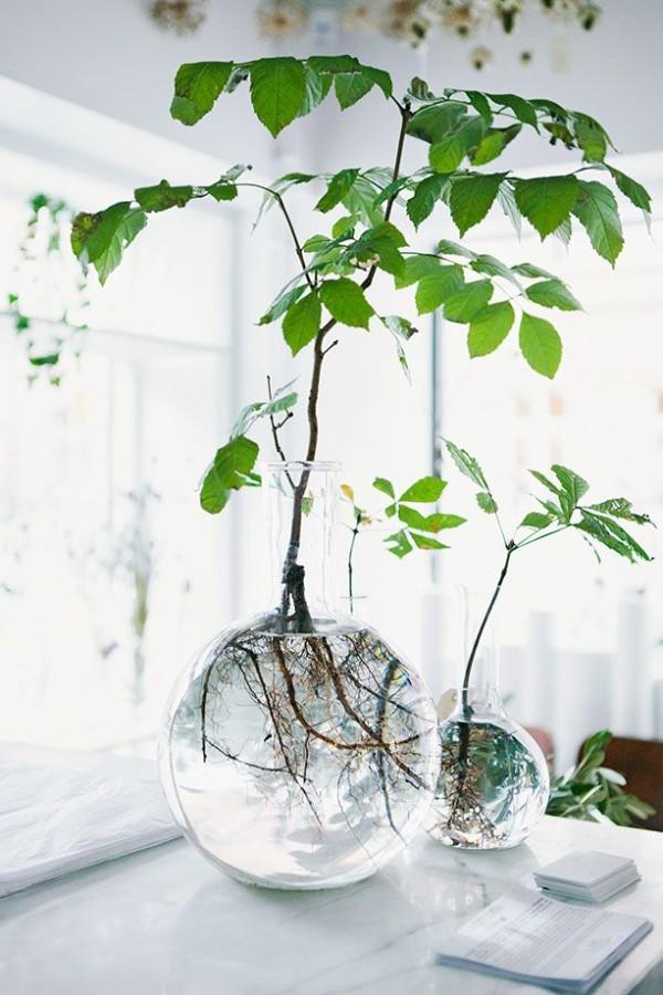 mantener planta de interior