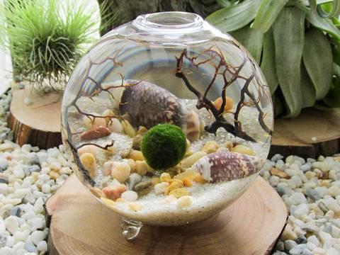 12-bonitas-formas-de-decorar-la-casa-con-plantas-de-interior-acuario-lleno