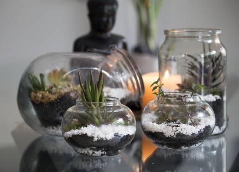 12-bonitas-formas-de-decorar-la-casa-con-plantas-de-interior-acuario-vacio