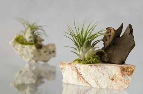 12-bonitas-formas-de-decorar-la-casa-con-plantas-de-interior-aereas-o-roca
