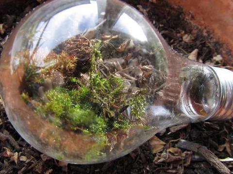 12-bonitas-formas-de-decorar-la-casa-con-plantas-de-interior-bombilla