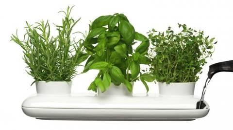 12-bonitas-formas-de-decorar-la-casa-con-plantas-de-interior-hierbas-aromaticas