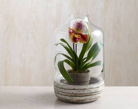 12-bonitas-formas-de-decorar-la-casa-con-plantas-de-interior-jarron
